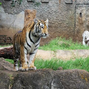 Tours de Ciudad de Guatemala y Zoo
